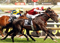 http://images.fotocommunity.com/photos/sports/horse-sport/a-thoroughbred-in-full-flight-at-the-caulfield-races-in-melbourne-ecb2d6f5-1f03-4926-a650-c7f9d2ee441a.jpg