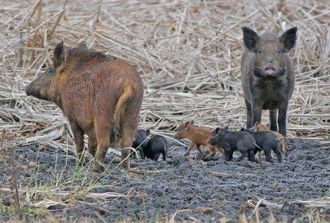 Wild Hogs graphic