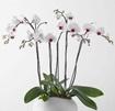 Simply Elegant Orchid Garden